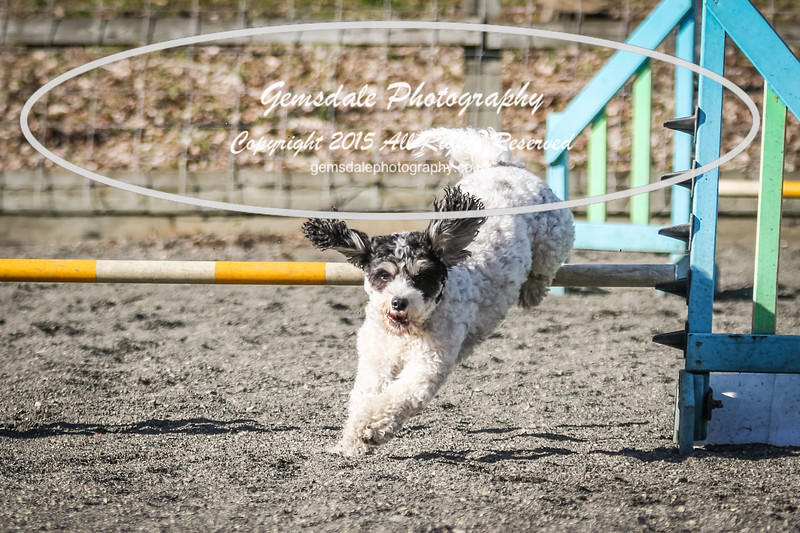 Paws at Play March 25th 2017-5100