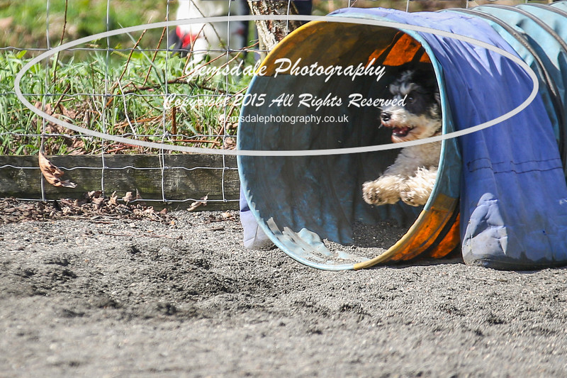 Paws at Play March 25th 2017-5014
