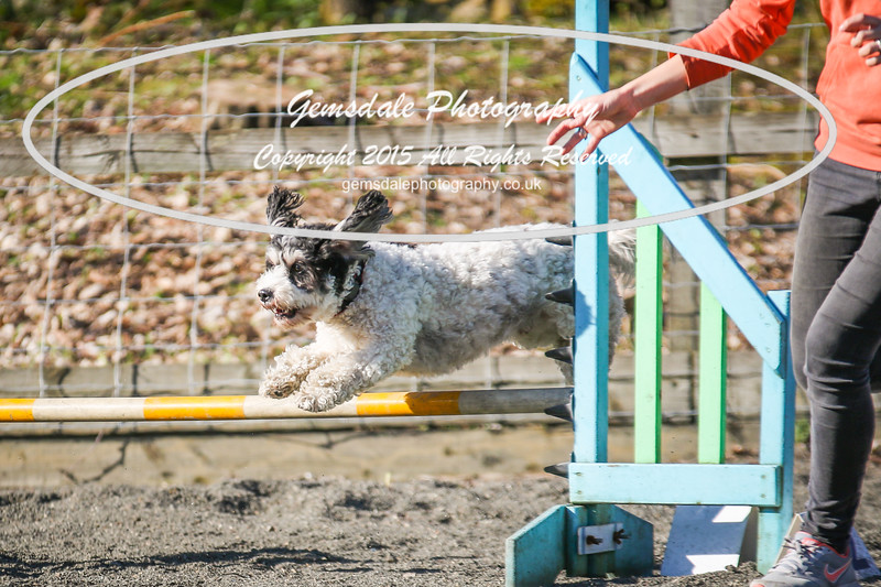 Paws at Play March 25th 2017-5103