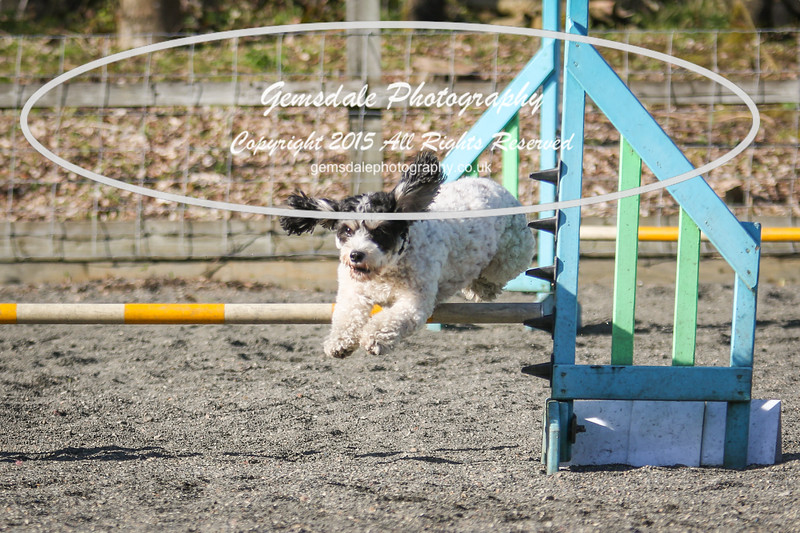 Paws at Play March 25th 2017-5099