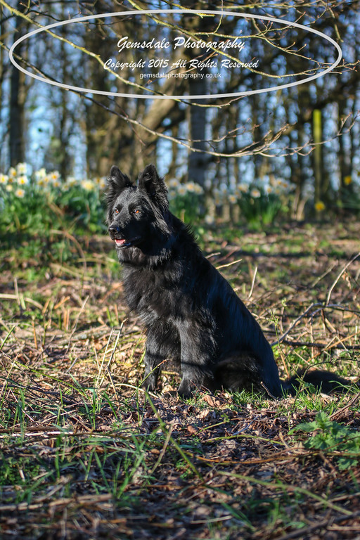 Paws at Play March 25th 2017-7010