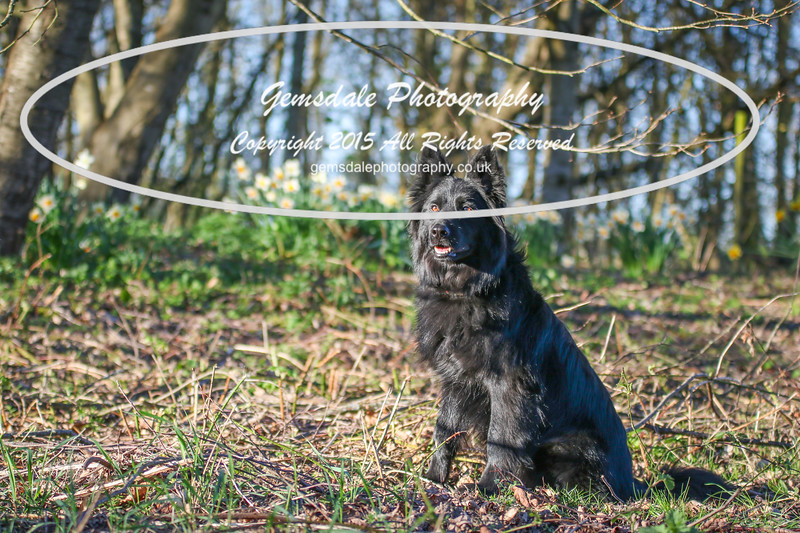 Paws at Play March 25th 2017-7001