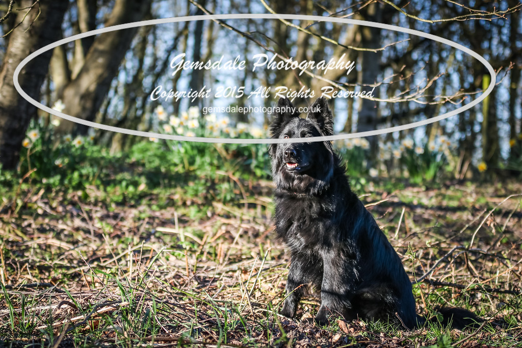 Paws at Play March 25th 2017-7002