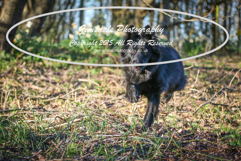 Paws at Play March 25th 2017-7028