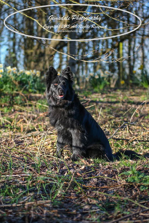 Paws at Play March 25th 2017-7014