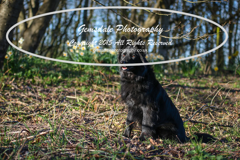 Paws at Play March 25th 2017-7004