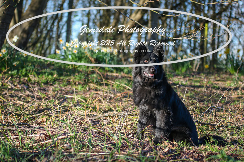 Paws at Play March 25th 2017-7024