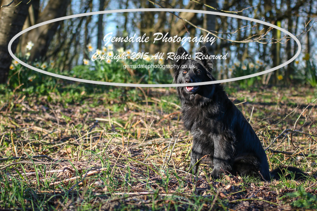 Paws at Play March 25th 2017-7020