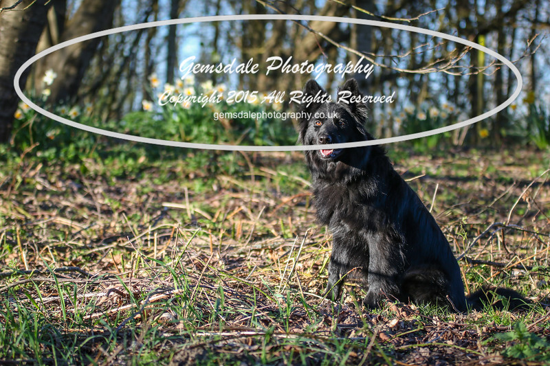Paws at Play March 25th 2017-7021