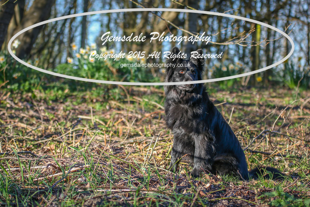 Paws at Play March 25th 2017-7022