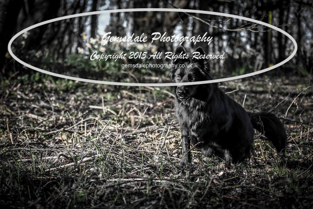 Paws at Play March 25th 2017-7026