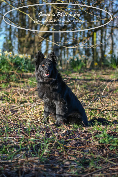 Paws at Play March 25th 2017-7013