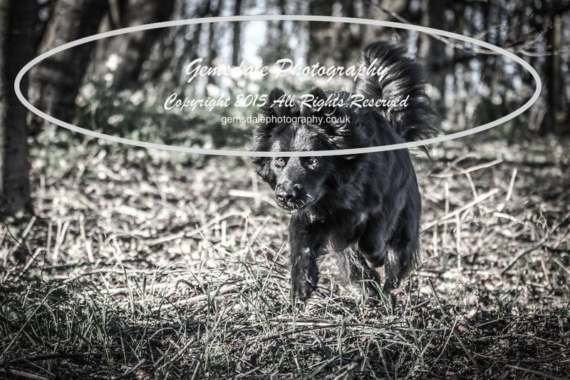 Paws at Play March 25th 2017-7030