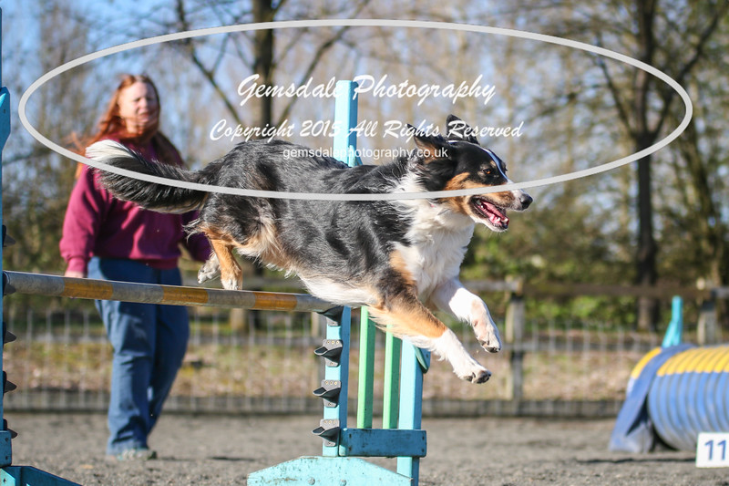 Paws at Play March 25th 2017-8010