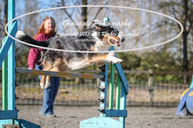 Paws at Play March 25th 2017-8009