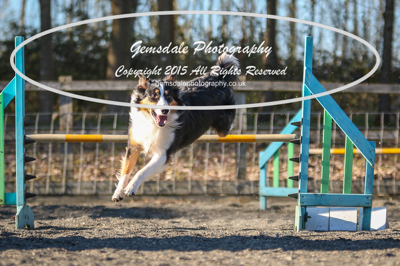 Paws at Play March 25th 2017-8016