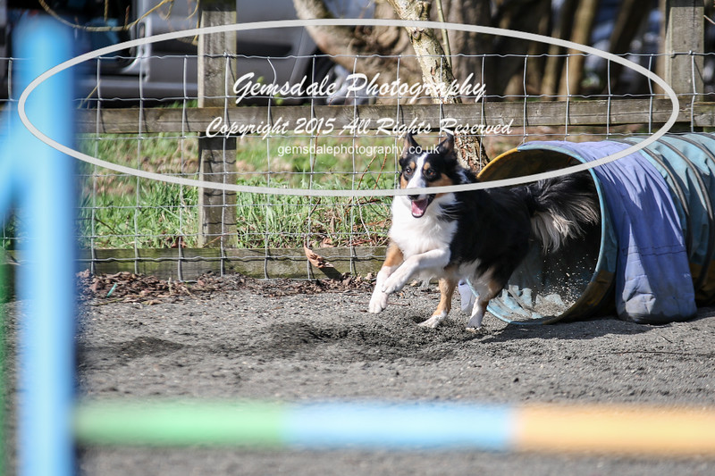 Paws at Play March 25th 2017-8000