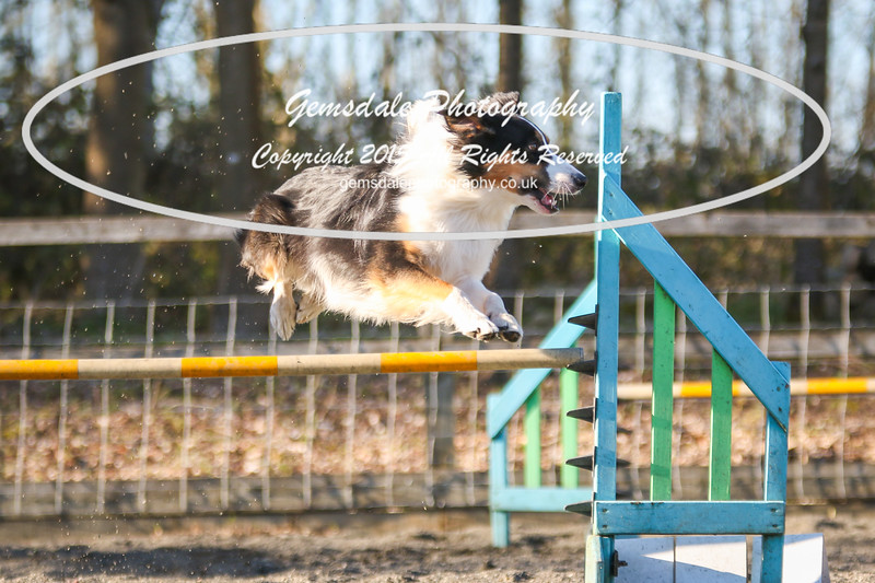 Paws at Play March 25th 2017-8014