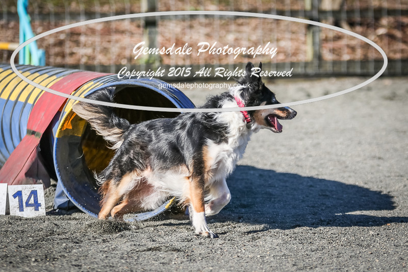 Paws at Play March 25th 2017-2040