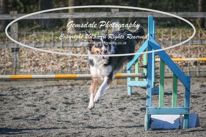 Paws at Play March 25th 2017-2044
