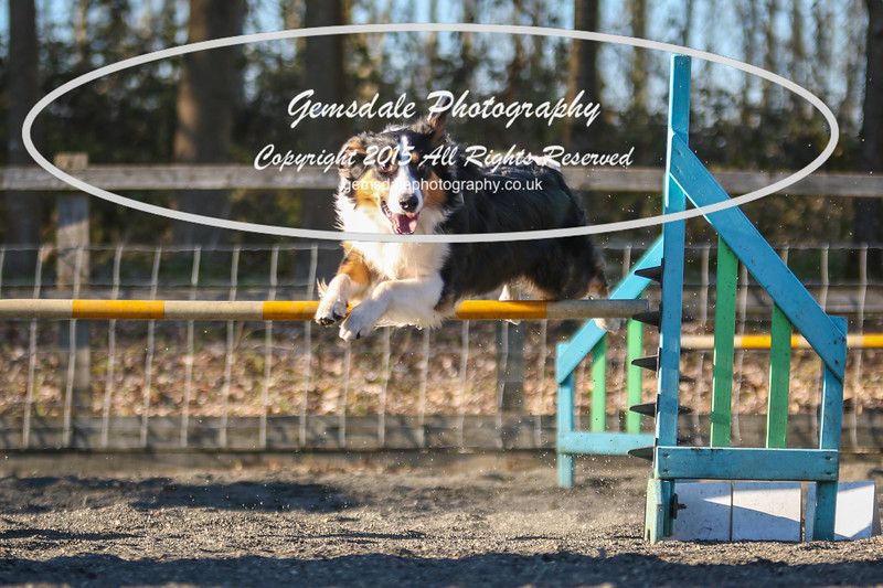 Paws at Play March 25th 2017-8015