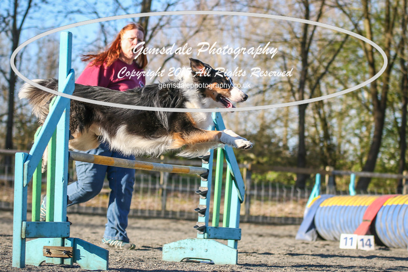 Paws at Play March 25th 2017-8018