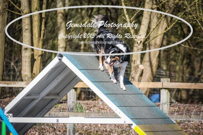 Paws at Play March 25th 2017-8005