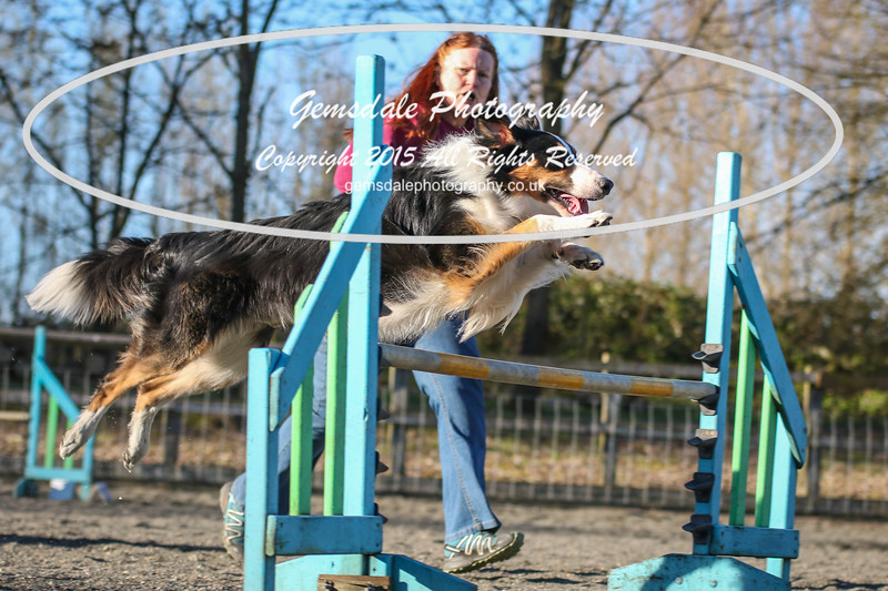 Paws at Play March 25th 2017-8017