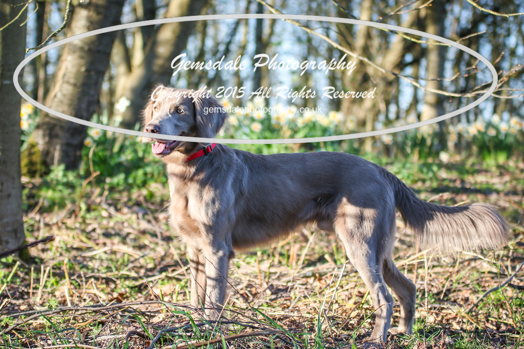 Paws at Play March 25th 2017-9025