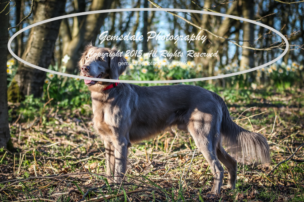 Paws at Play March 25th 2017-9020
