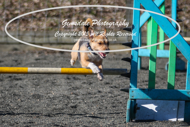 Paws at Play March 25th 2017-11012