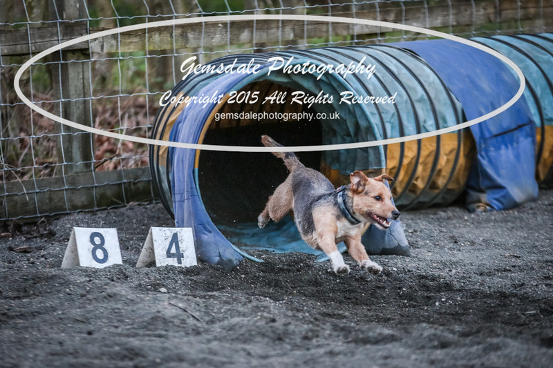 Paws at Play March 25th 2017-11022