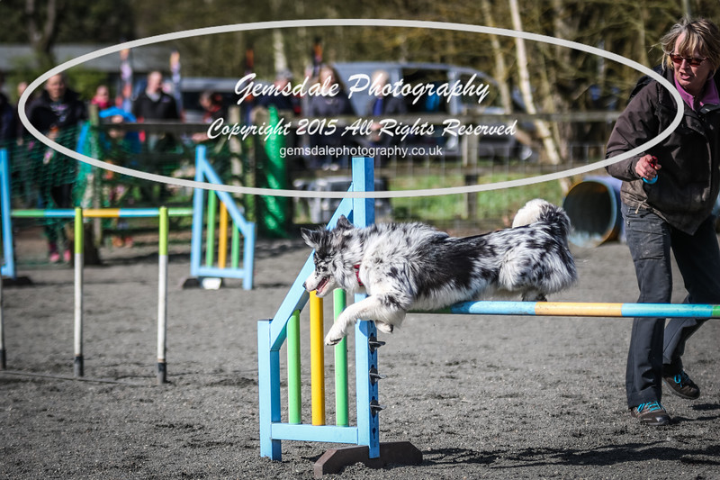Paws at Play March 25th 2017-1028