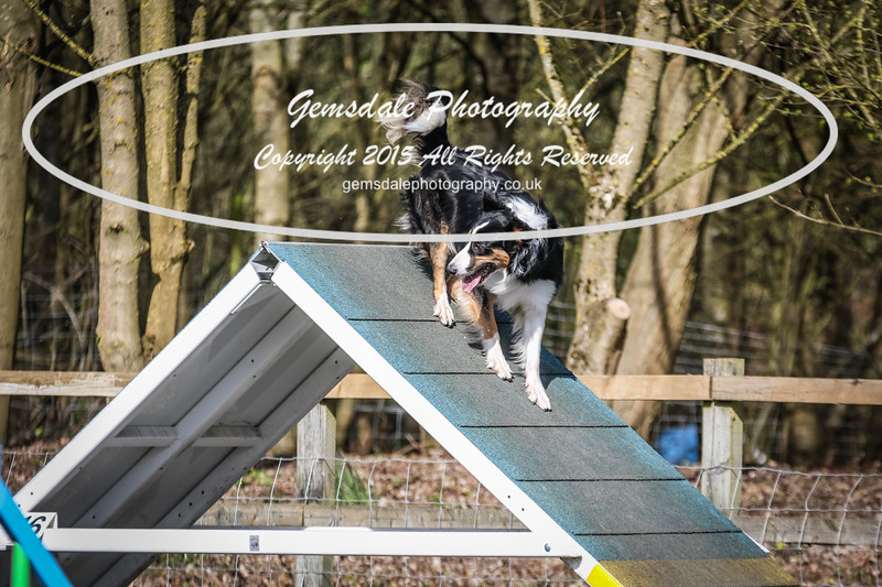 Paws at Play March 25th 2017-8004