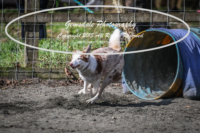 Paws at Play March 25th 2017-1046