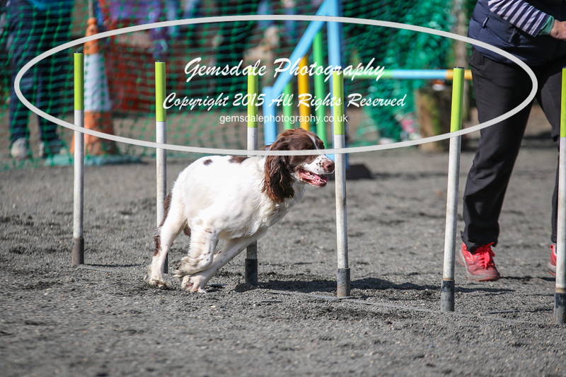 Paws at Play March 25th 2017-1004
