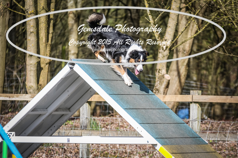 Paws at Play March 25th 2017-8003
