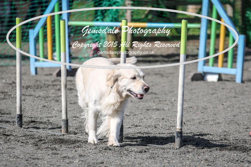 Paws at Play March 25th 2017-1014