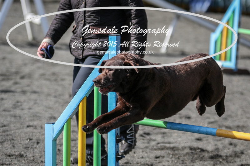 Paws at Play March 25th 2017-1003