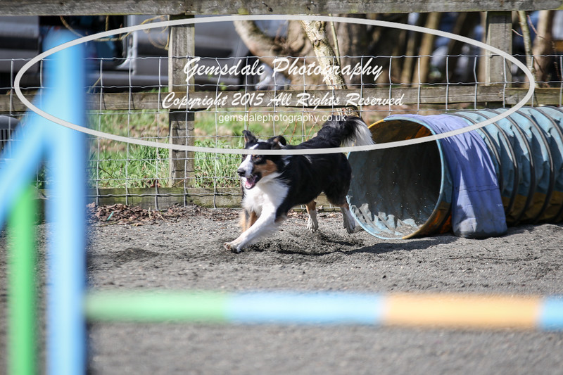 Paws at Play March 25th 2017-8001