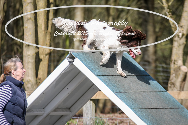 Paws at Play March 25th 2017-1006