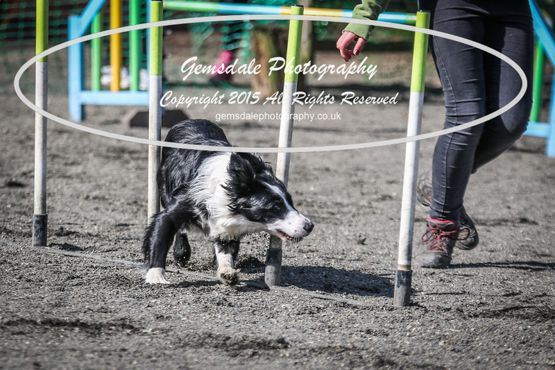 Paws at Play March 25th 2017-1039