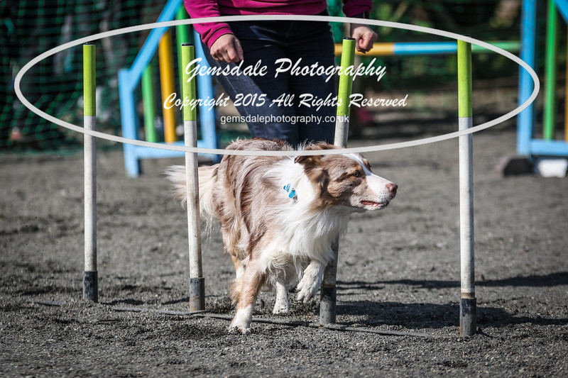 Paws at Play March 25th 2017-1020