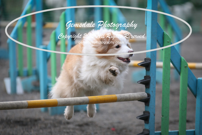 Paws at Play 27th February 2016-4020