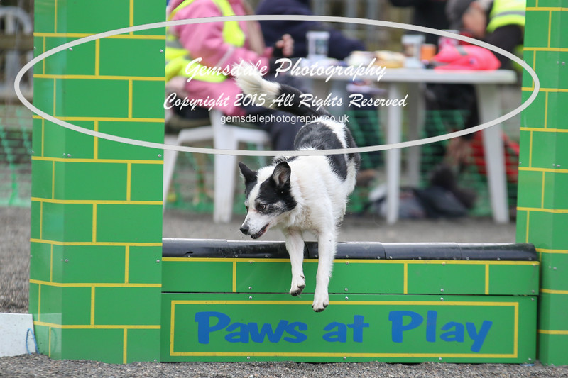 Paws at Play 27th February 2016-4024