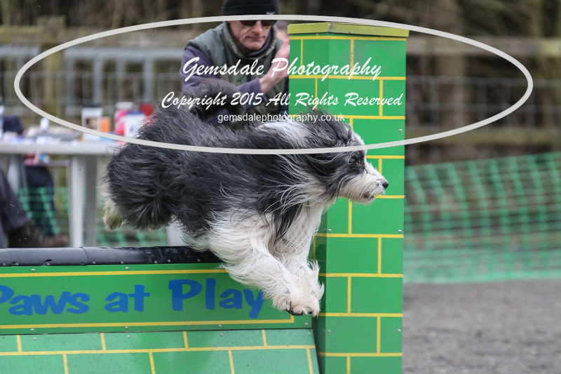 Paws at Play 27th February 2016-4036