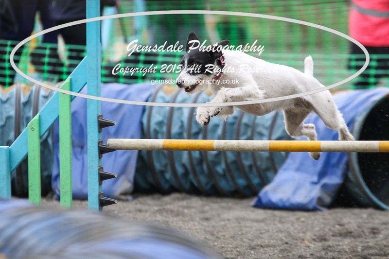 Paws at Play 27th February 2016-4037