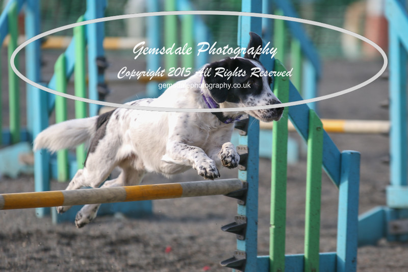 Paws at Play 27th February 2016-4002