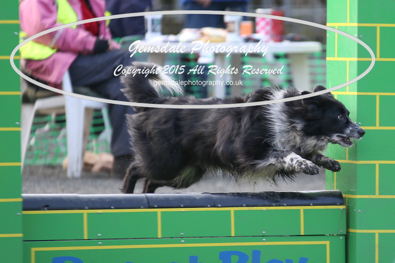 Paws at Play 27th February 2016-4011