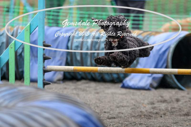 Paws at Play 27th February 2016-4025